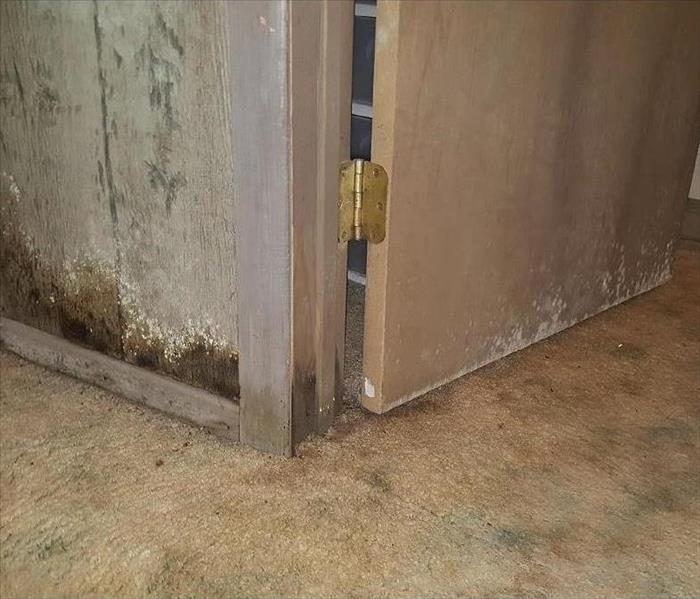 Water Damage When Water Damage Causes Mold Growth